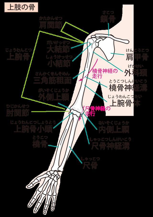 ドケルバン病  腱鞘炎